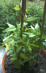 plant 4