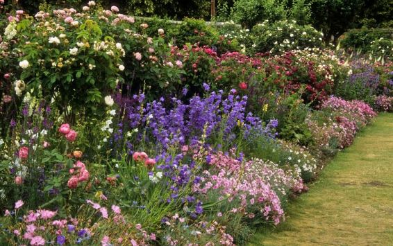 english-flower-border